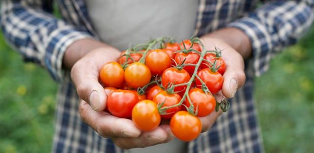 Hubungan Antara Pneumonia Dengan Mourizio Sarri Serta Tomat
